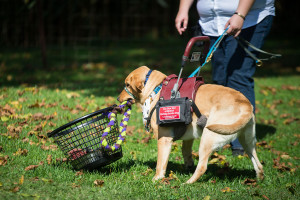 Service-Dog-Demo