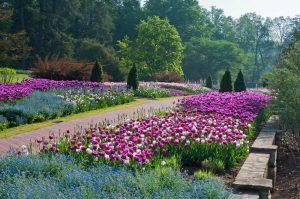 longwood-spring