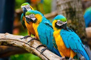 bird expo
