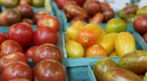 Linvilla Orchards holds is annual Tomato Festival this weekend.