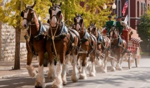 The Budweiser Clydesdales will be making a First Friday visit to West Chester.