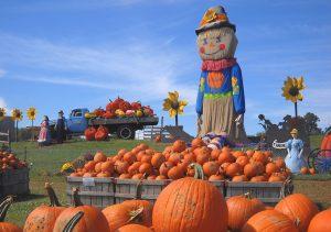 Pumpkinland at Linvilla Orchards.