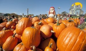 'Pumpkinland' at Linvilla Orchards.