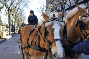 Horse-drawn carriage rides in Kennett Square.